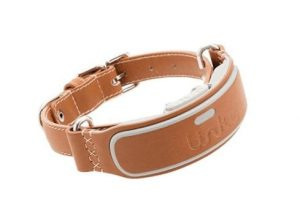 Link AKC leather collar with dog tracker activity feature.