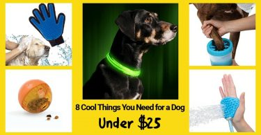 Things You Need for a Dog