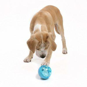 Dog is playing with OurPets IQ Treat Ball.