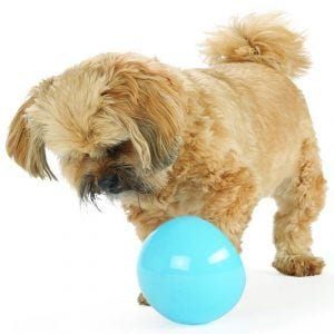 Little puppy is playing with Planet Dog Orbee Tuff Snoop Interactive Treat Ball.