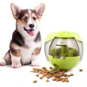 Dog is playing with focuspet iq treat ball.