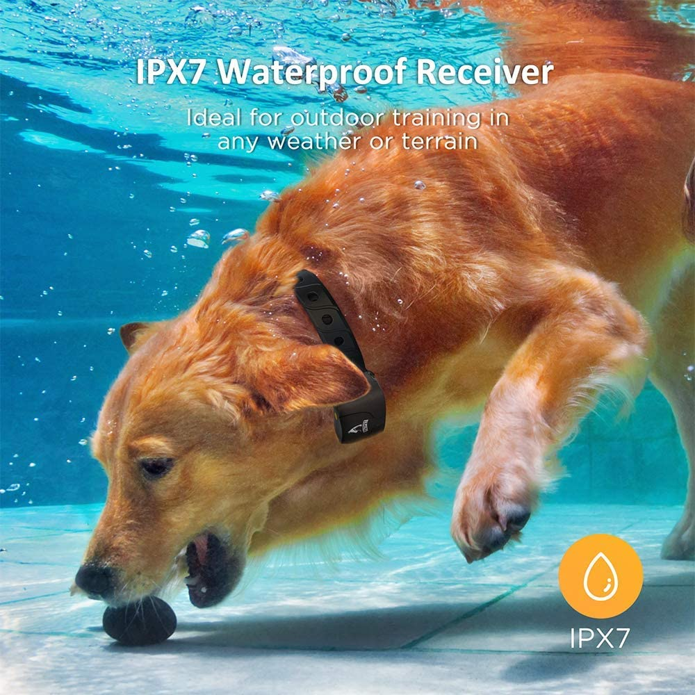 Gold retriever under water with Patpet training collar