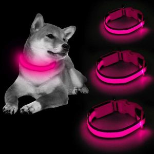 Pink Clan-x LED Dog Collar on shiba, comes in different sizes.