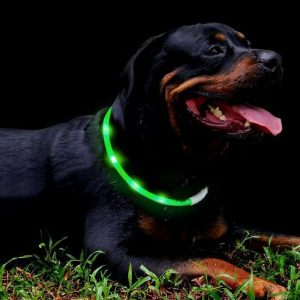 Dog has a green Fashion & Cool LED collar on.