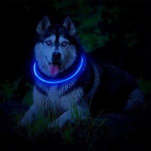 Glow with blue LED light from Fashion & Cool Light Up Dog Collar at night.