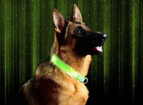 Pet Industries Metal Buckle LED Collar in green color on the dog.