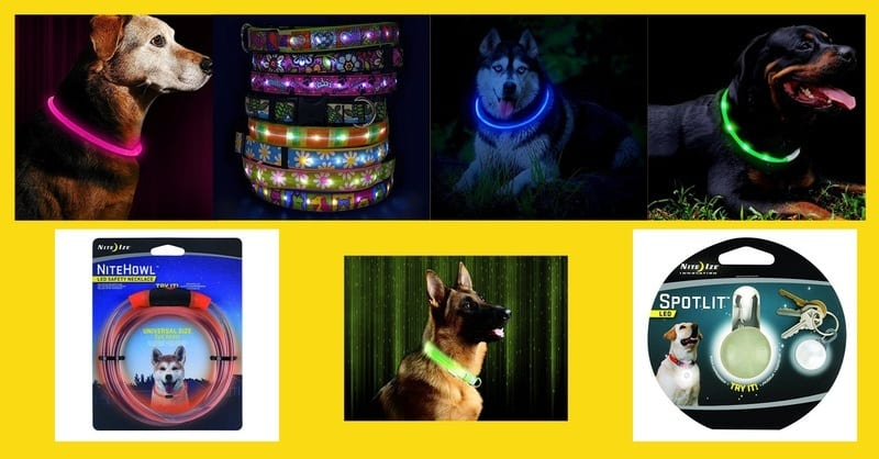 The selection of the best LED dog collar in 2020.