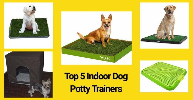 Best Indoor dog potties for home use