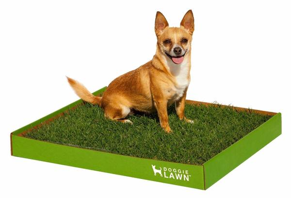My dog is peeing on DoggieLawn grass indoor dog potty system.