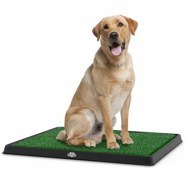 Large dog is using PETMAKER indoor grass potty.