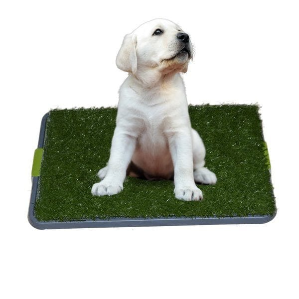 A puppy is trained to use Sonnyridge Easy Dog Potty.