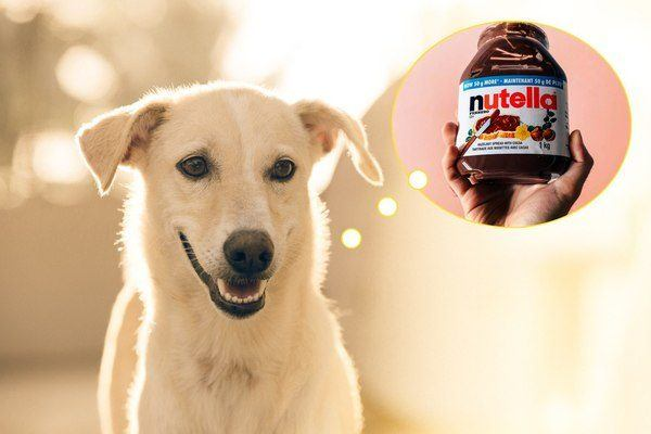 dogs can't eat chocolate