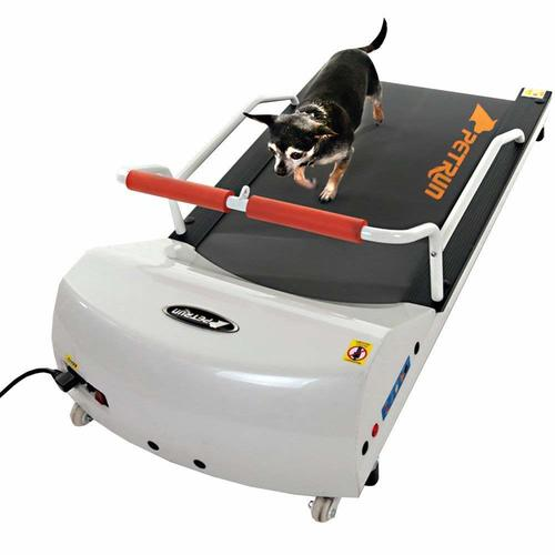 Small dog on a GoPet Petrun PR700 treadmill that designed for dogs