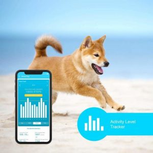 Shiba is running with PETble dog fitness activity tracker.