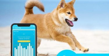 Shiba is running with Petfon dog fitness activity tracker.