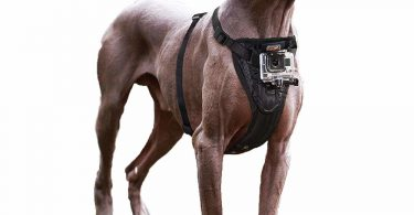 dog harness with camera mount kurgo