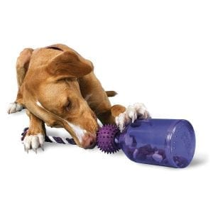 Doggie interacts with PetSafe Busy Buddy Tug-A-Jugg Smart Toy.