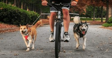 walky dog bike leash review