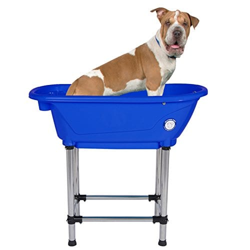Pitbull is going to have a bath time in Flying Pig Portable Bath Tub