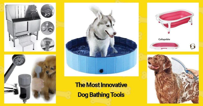 The best dog bathing tool from the list.