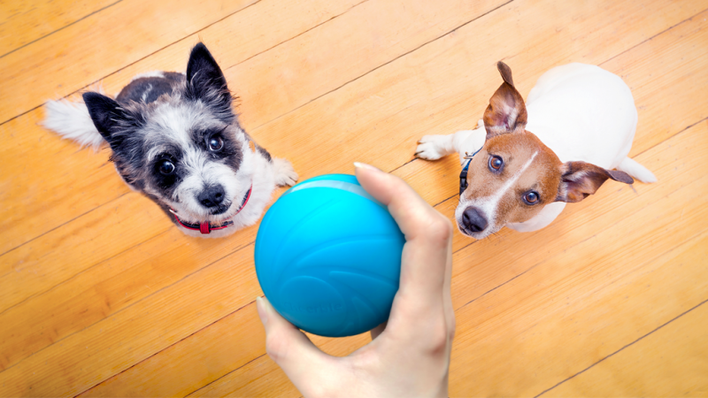 Dogs-and-Wicked-Ball