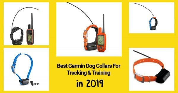 Best Garmin Collars