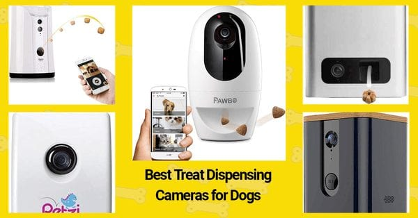 Best Treat Dispensing Cameras for Dogs