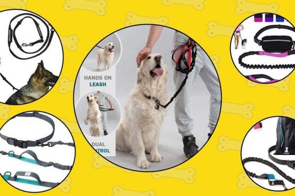5 picked hands free leashes for dogs