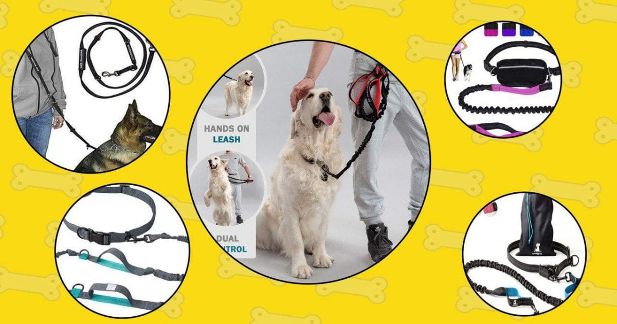 5 hands free leashes for dogs that we picked for the main images.