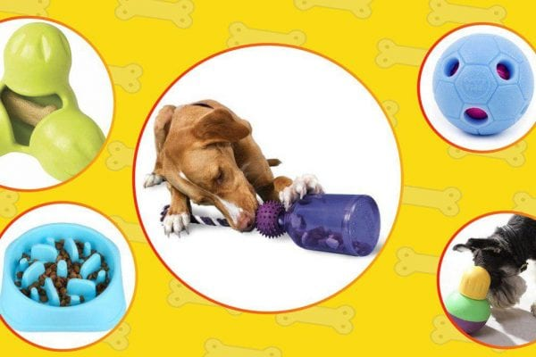 best interactive dog toys in 2020