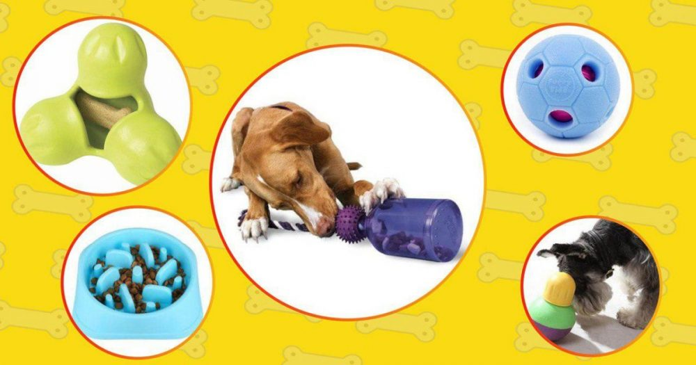 Dog gadget like interactive you helps dog increase IQ and keep them busy