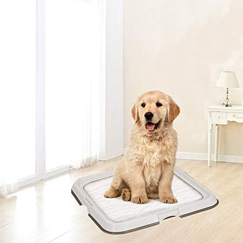 Large dog is having indoor potty training with PAWISE pad.