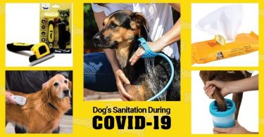 dog's sanitation during covid 19