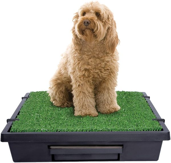Large dog is using Petsafe indoor dog potty with real grass patch