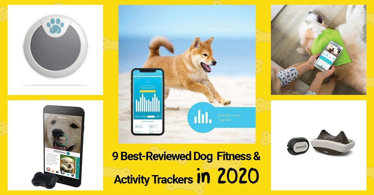 9 best reviewed dog fitness and activity trackers in 2020.