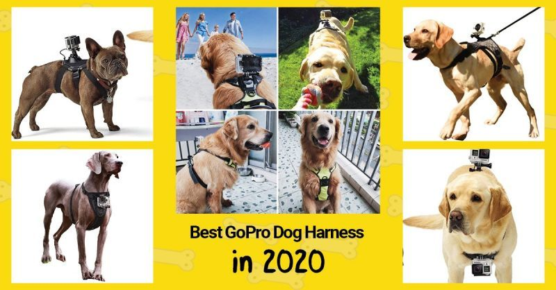 Top 4 Best GoPro Dog Harnesses & Action Camera Dog Mounts in 2020.