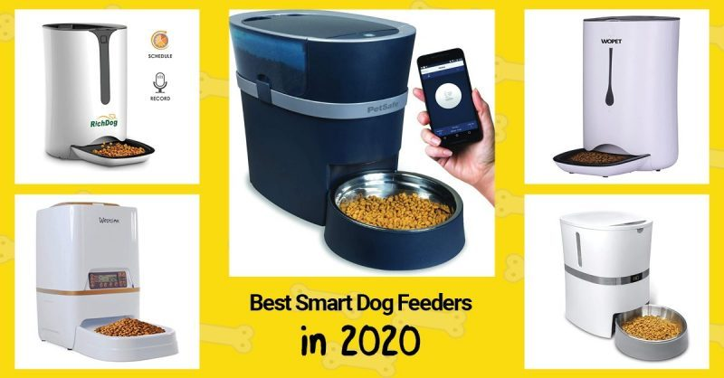 5 smart dog feeders out of 10 that we picked for the list.
