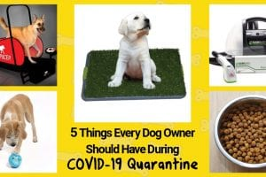 covid-19 quarantine and self isolation with a dog at home.