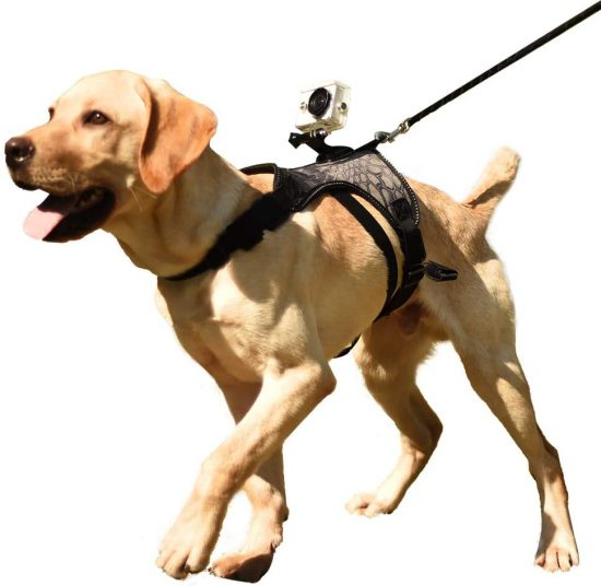 Walking dog with Heywean Dog Harness with Camera Mount from dog perspective.
