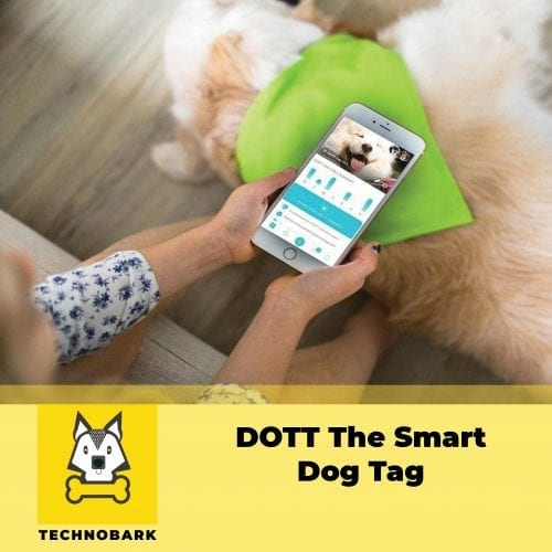 Dog owner is checking dog activity data from DOTT The Smart Dog Tag on iPhone.