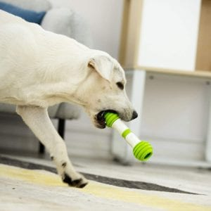 Dog is playing with Playgeek smart bone