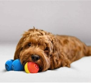 Babble interactive dog ball talks and interacts with your dog.