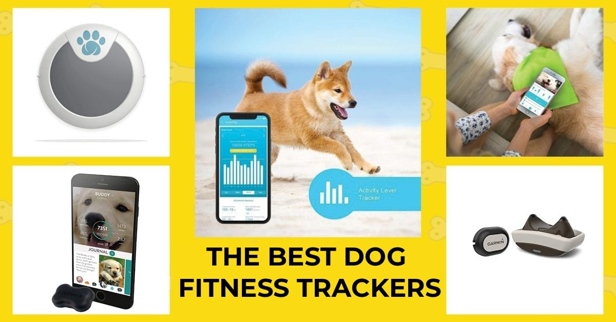 12 best reviewed dog fitness and activity trackers in 2021.