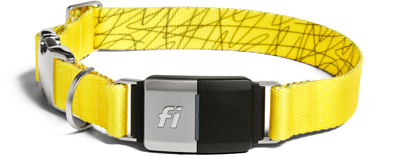 Fi dog's location and activity tracker collar for dog in yellow colour.