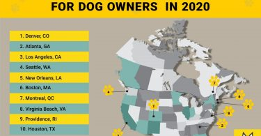 TOP-10 North American cities for dog owners infographic