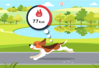 Dog is burning calories while walking