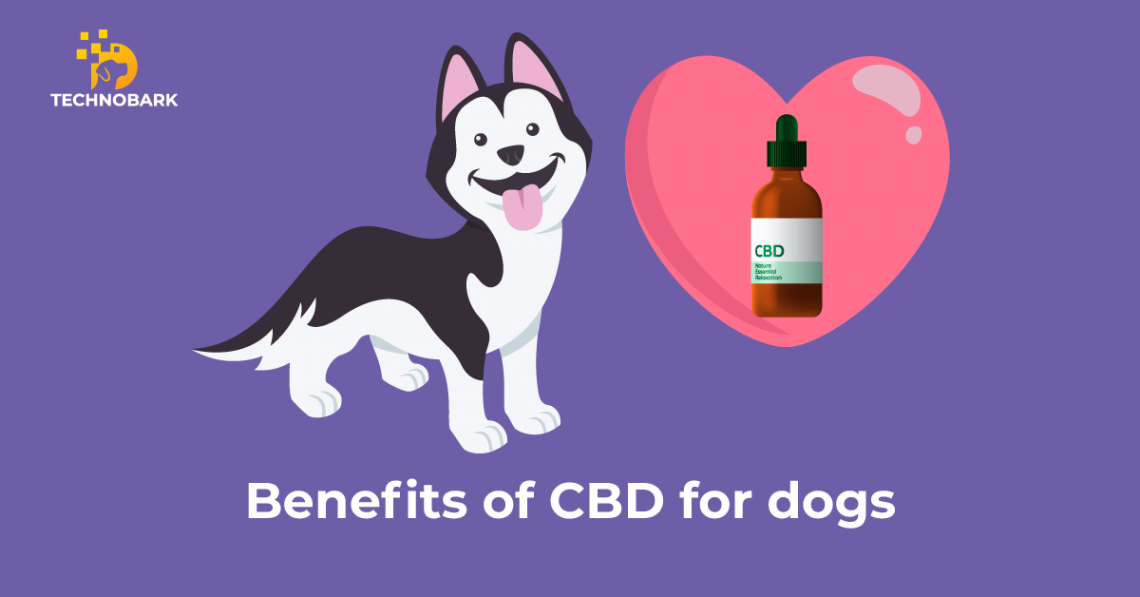 Dog is happy after taking CBD product.