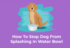 Dog is splashing the water bowl