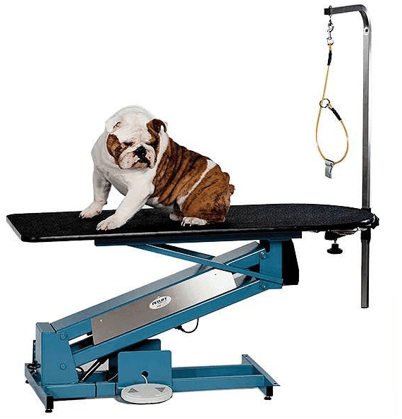 French Bulldog on the PetLift MasterLift Low-Rider Electric Grooming Table