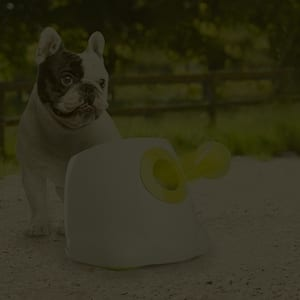 Automatic ball launcher is a perfect gadget for dogs